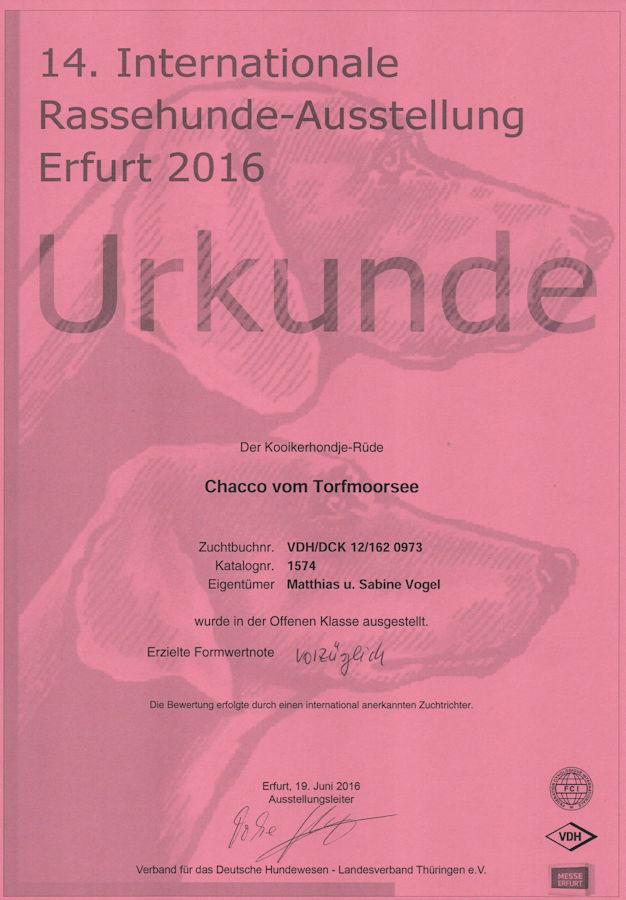 20160619 - Chacco - CACIB Erfurt V1 - klein